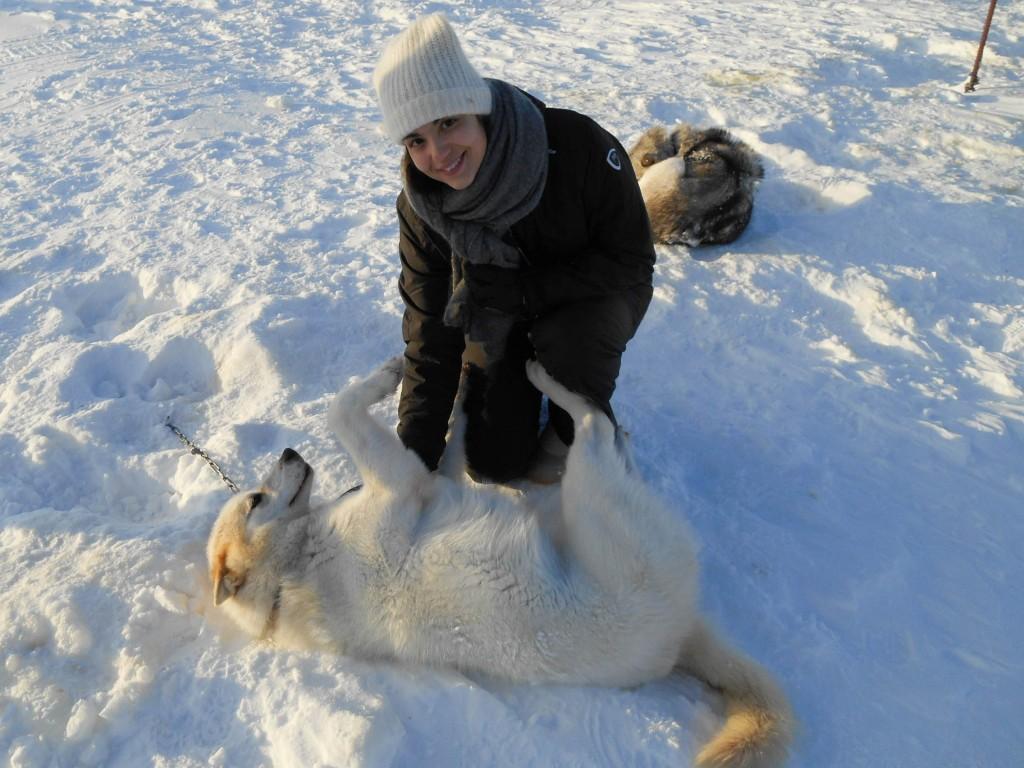 chien traineau seltun blue lagoon (13 sur 50)