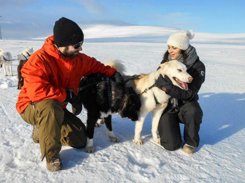 chien traineau seltun blue lagoon (25 sur 50)