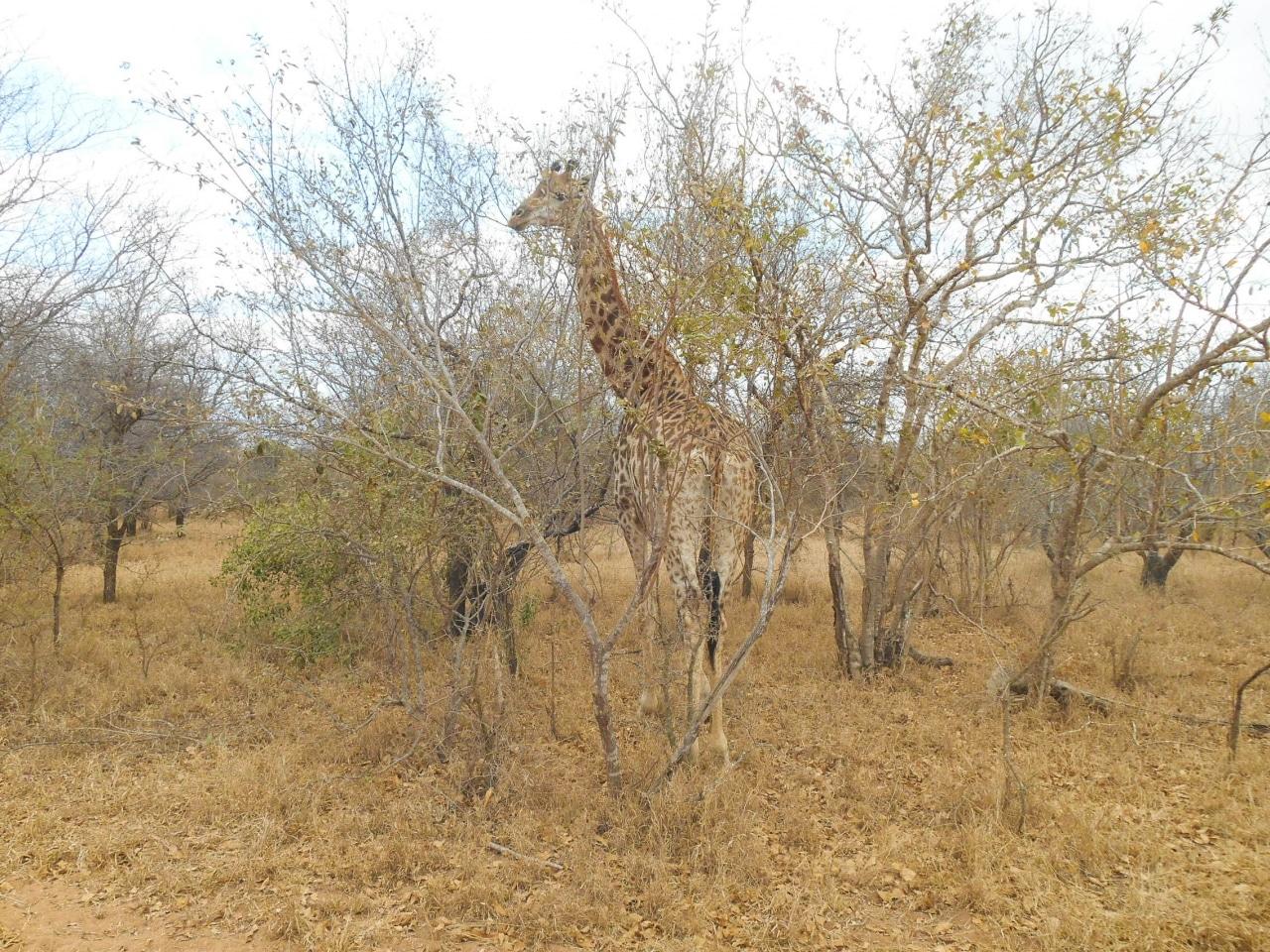 safari arrivee (3 sur 5)