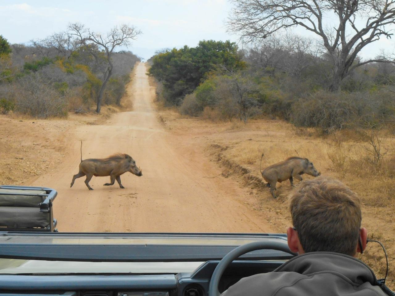 safari arrivee (4 sur 5)