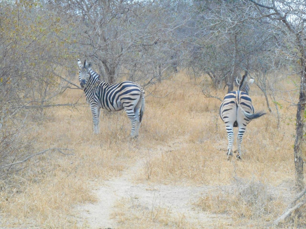 safari arrivee (5 sur 5)