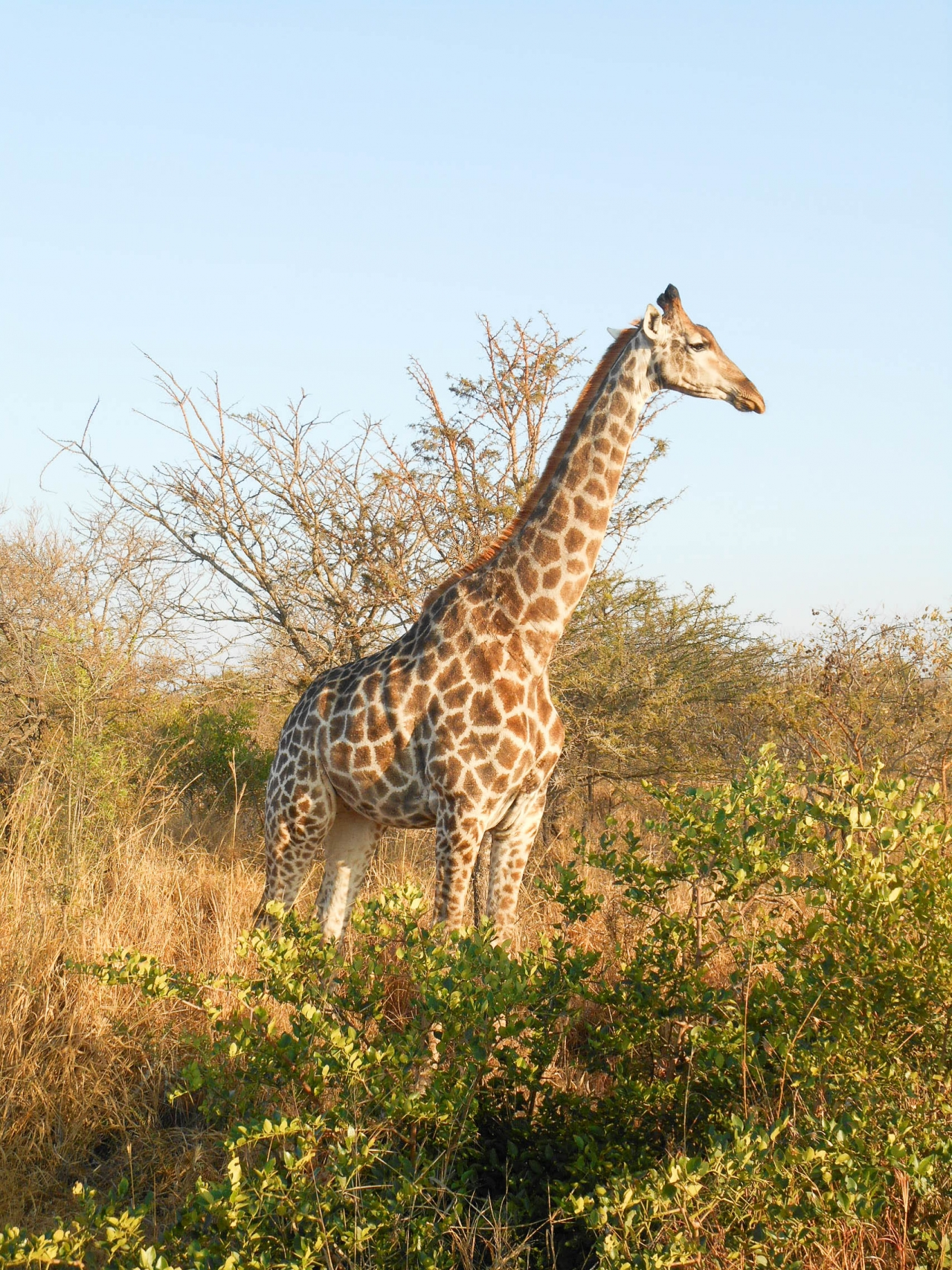 safari game drive (14 sur 38)