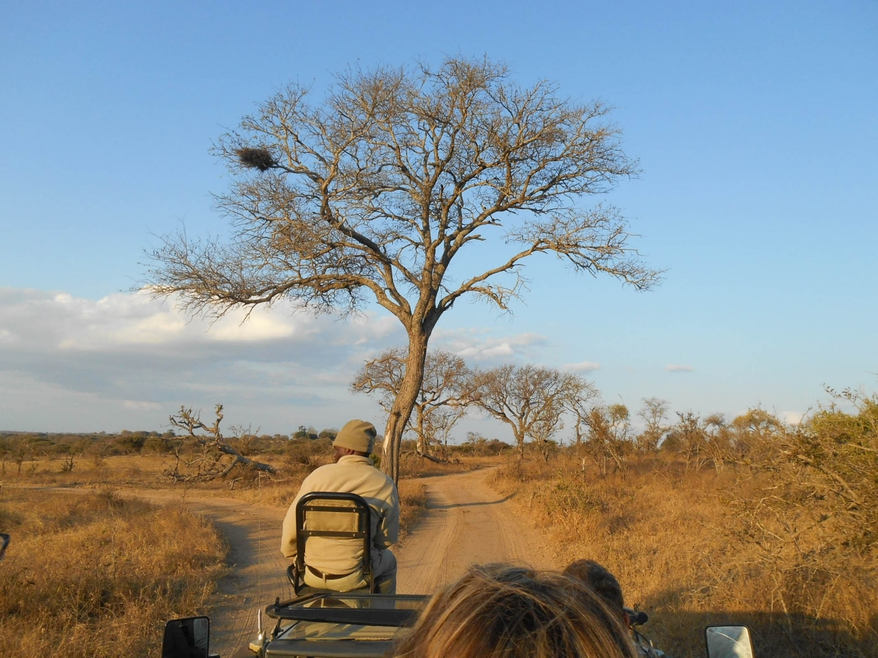safari game drive (4 sur 38)