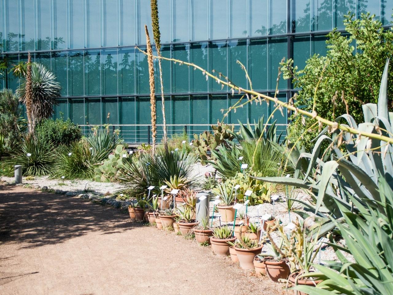 museum jardin botanique toulouse