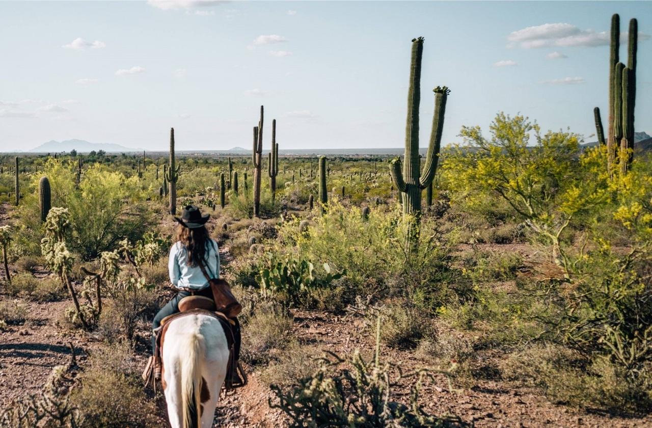 Carnets de Traverse - Road-trip en Arizona
