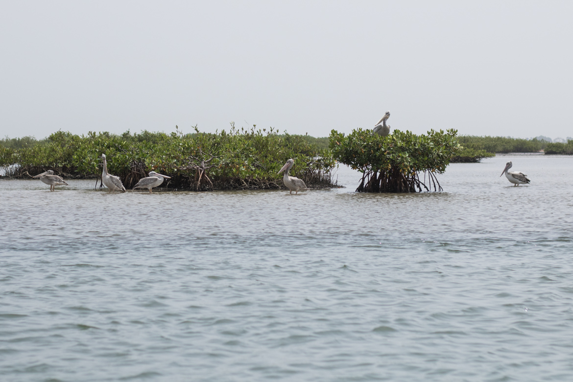 une semaine au senegal decouverte parc national Saloum iles