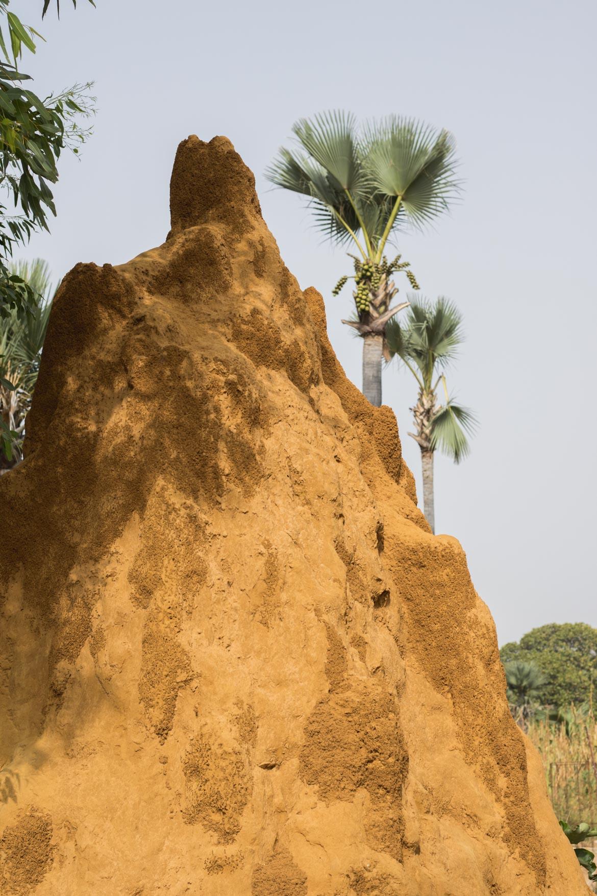 une semaine au senegal decouverte depaysement termitiere
