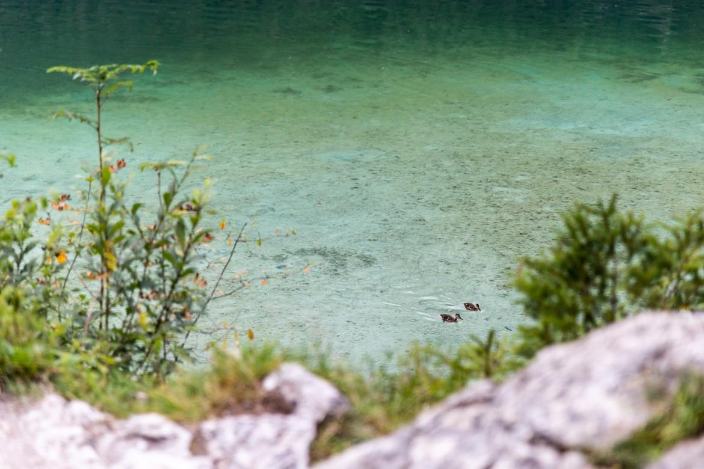 road trip alpes bavaroises autrichiennes lac Hintersee